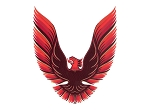 DECAL KIT 5-COLOR RED TRANS AM 79-80